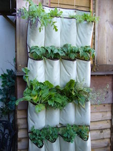 Shoe Pocket Vertical Garden